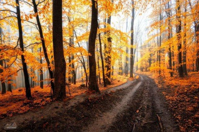 Un vis de toamna, printre copaci - Poza 15