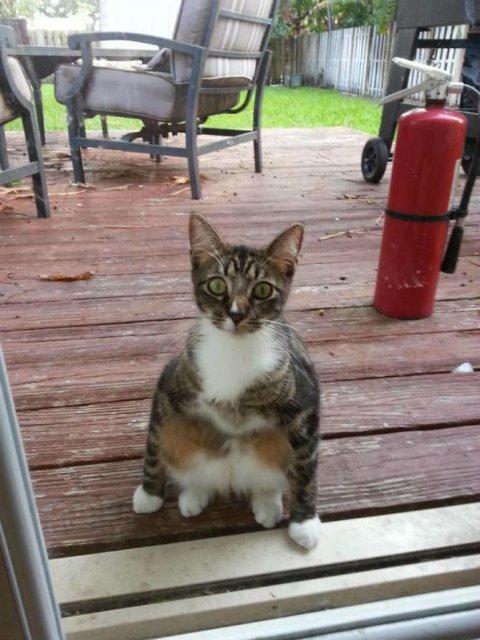 Protestele felinelor: 13 pisici incuiate pe afara, in crize - Poza 10