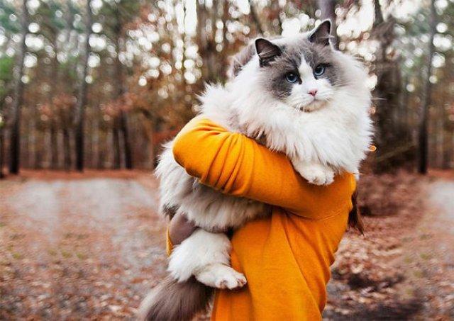 Cele mai pufoase pisici din lume - Poza 13