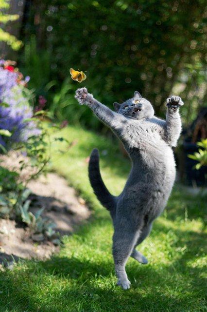 Altfel de poze cu pisici, in ipostaze haioase - Poza 11
