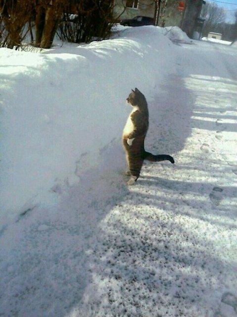 Altfel de poze cu pisici, in ipostaze haioase - Poza 12