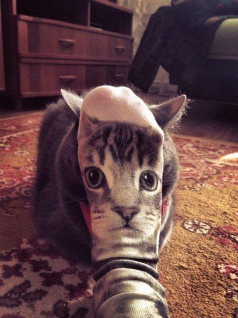 Altfel de poze cu pisici, in ipostaze haioase - Poza 13