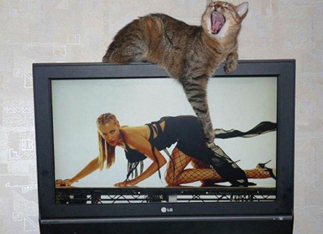 Altfel de poze cu pisici, in ipostaze haioase - Poza 14