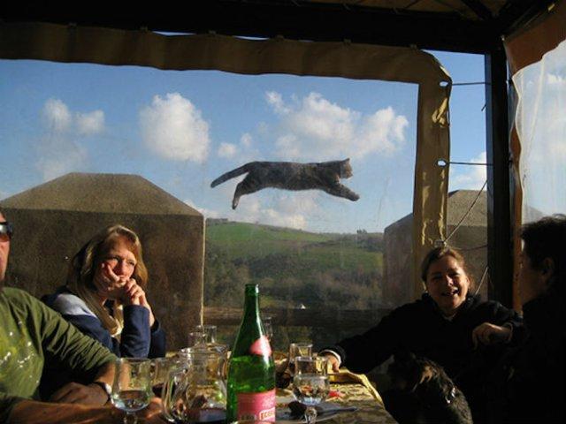 Altfel de poze cu pisici, in ipostaze haioase - Poza 15