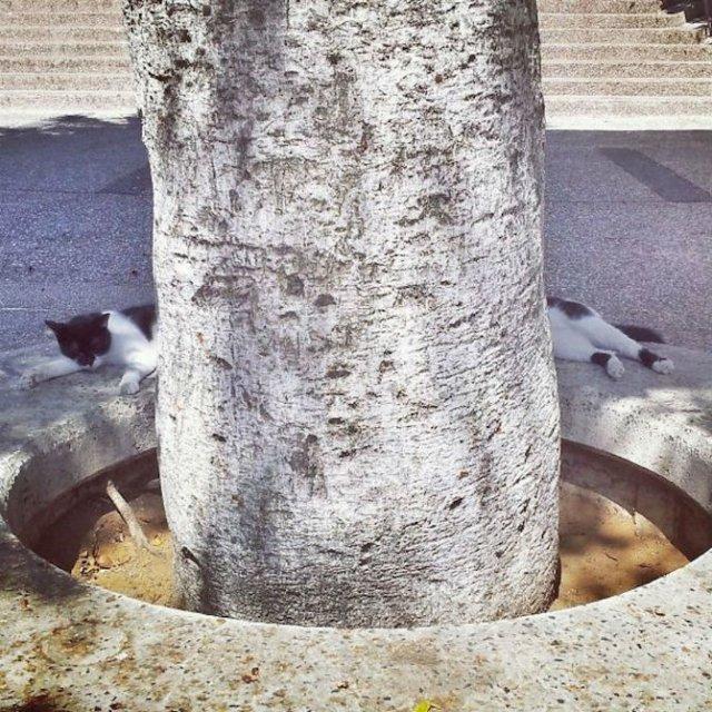 Altfel de poze cu pisici, in ipostaze haioase - Poza 16