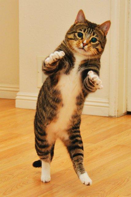 Altfel de poze cu pisici, in ipostaze haioase - Poza 17
