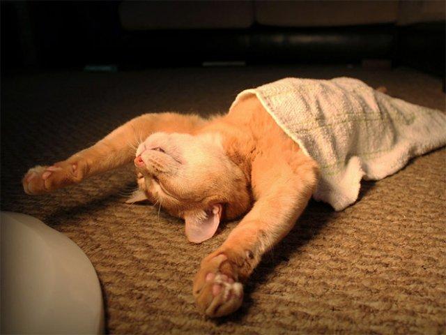 10 fotografii haioase cu pisici adormite - Poza 1