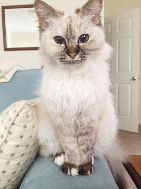 Cele mai batrane pisici adoptate de cei mai inimosi oameni - Poza 9
