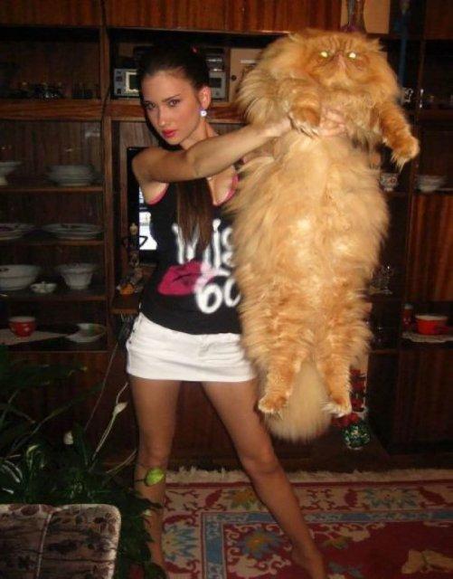 Feline XXL: Cele mai mari pisici din lume - Poza 12