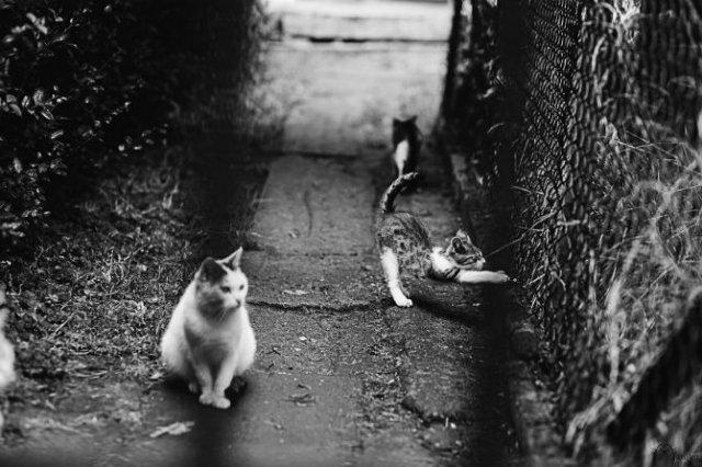 Pisici in alb si negru: Cel mai vibrant pictorial cenusiu cu feline - Poza 14