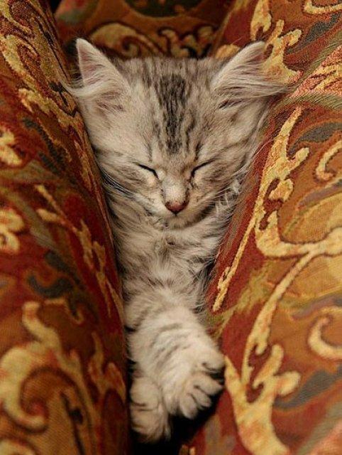 17 Pisici care dorm in cele mai haioase pozitii - Poza 15