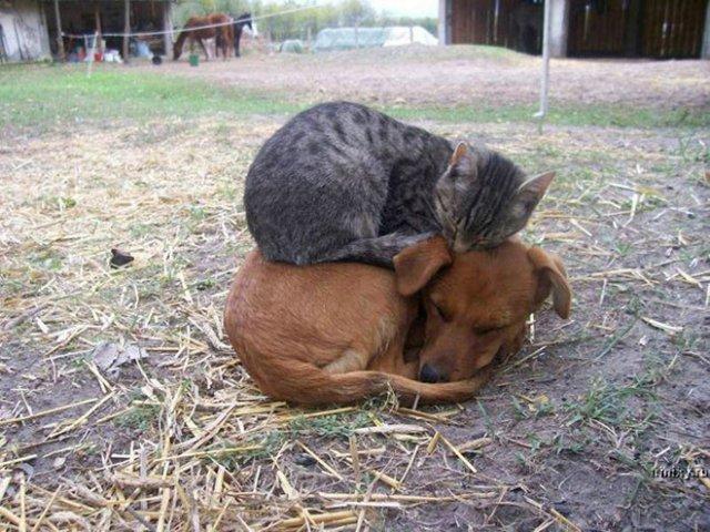 10 fotografii haioase cu pisici adormite - Poza 3