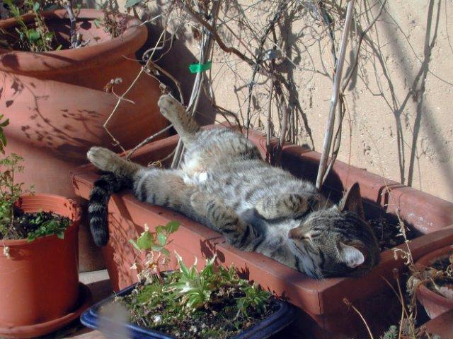 10 fotografii haioase cu pisici adormite - Poza 4