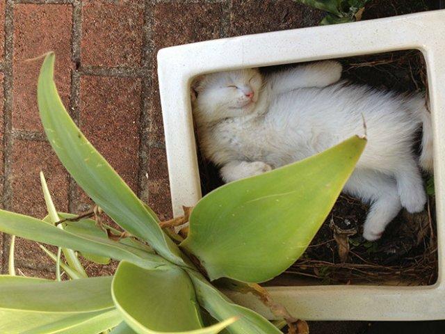10 fotografii haioase cu pisici adormite - Poza 6
