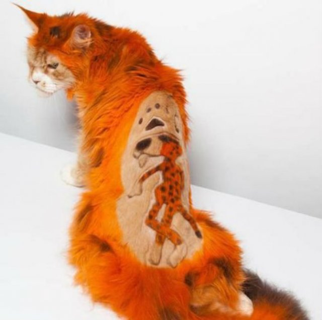 10 pisici tunse in cele mai trasnite feluri - Poza 10