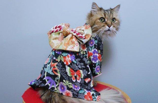 Pisicile in chimonouri fac furori in Japonia - Poza 10