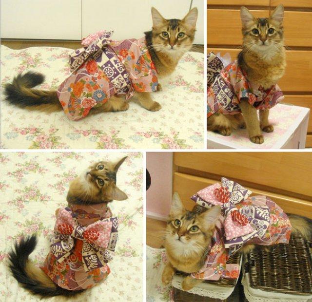 Pisicile in chimonouri fac furori in Japonia - Poza 11