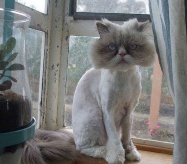 10 pisici tunse in cele mai trasnite feluri - Poza 8