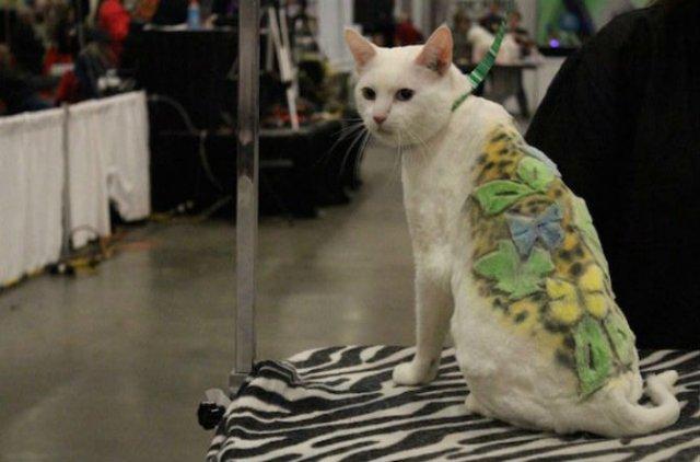 10 pisici tunse in cele mai trasnite feluri - Poza 9