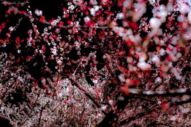 Primavara din Japonia, in cele mai frumoase poze - Poza 10