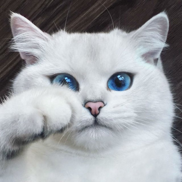 Pisicuta cu cei mai frumosi ochi din lume - Poza 1