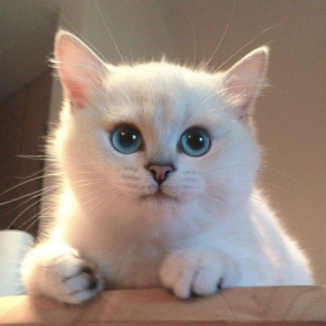Pisicuta cu cei mai frumosi ochi din lume - Poza 9