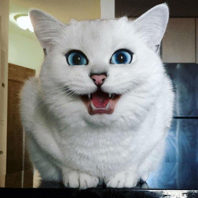 Pisicuta cu cei mai frumosi ochi din lume - Poza 10