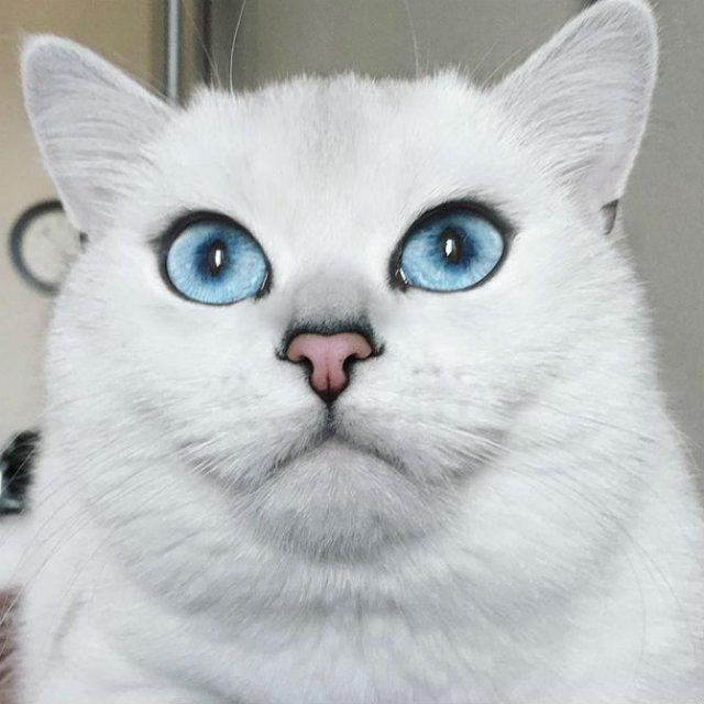 Pisicuta cu cei mai frumosi ochi din lume - Poza 6