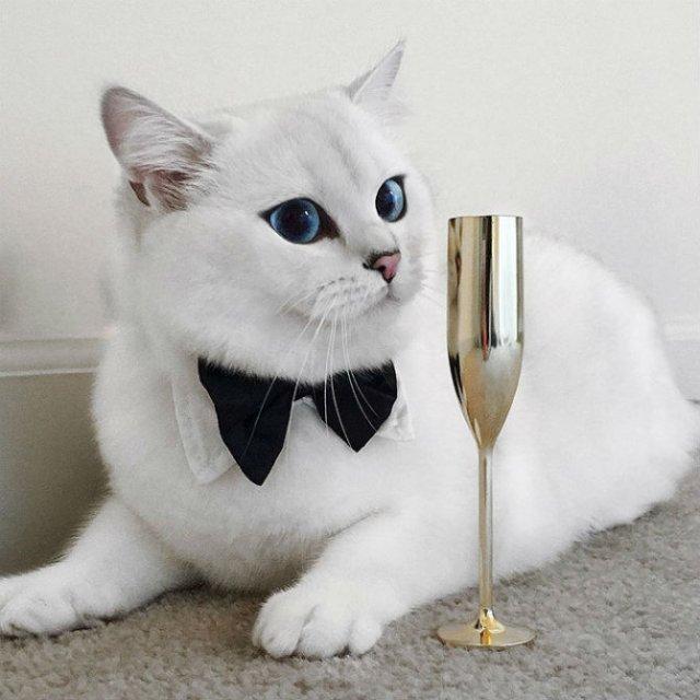 Pisicuta cu cei mai frumosi ochi din lume - Poza 7