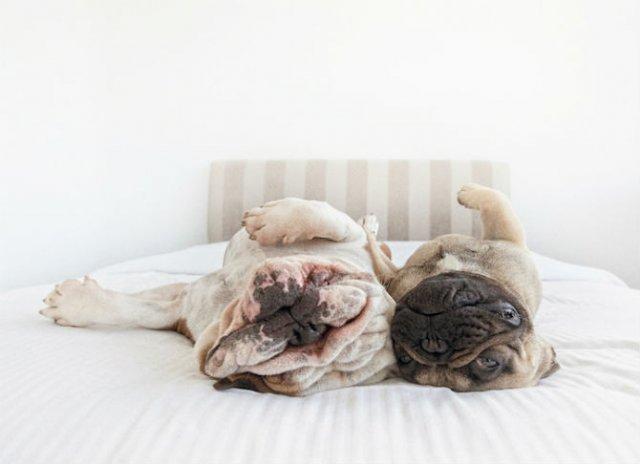 Pictorialul sucit cu cei mai simpatici caini - Poza 1