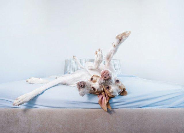 Pictorialul sucit cu cei mai simpatici caini - Poza 2