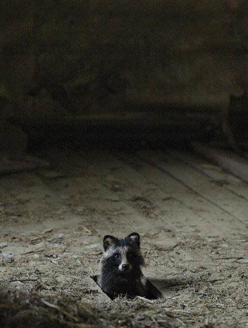 Case abandonate, ocupate de cei mai simpatici vizitatori - Poza 1