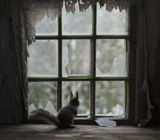 Case abandonate, ocupate de cei mai simpatici vizitatori - Poza 2