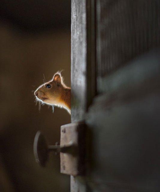 Case abandonate, ocupate de cei mai simpatici vizitatori - Poza 4