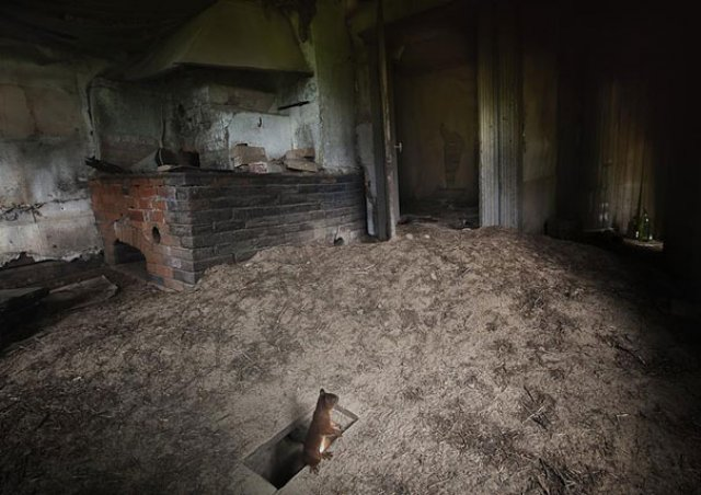 Case abandonate, ocupate de cei mai simpatici vizitatori - Poza 6
