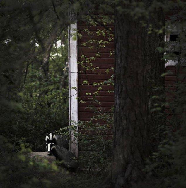 Case abandonate, ocupate de cei mai simpatici vizitatori - Poza 7