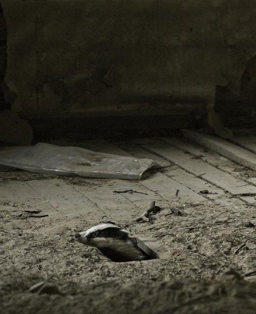 Case abandonate, ocupate de cei mai simpatici vizitatori - Poza 8