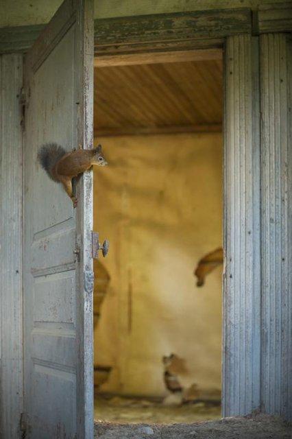 Case abandonate, ocupate de cei mai simpatici vizitatori - Poza 9