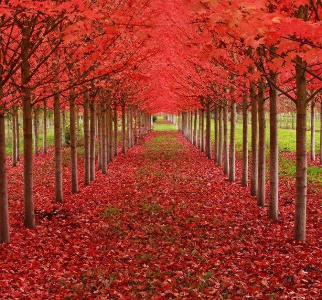 Arborii mirifici ai lumii, in noua poze uluitoare - Poza 6