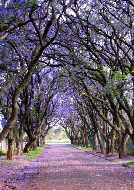 Arborii mirifici ai lumii, in noua poze uluitoare - Poza 7