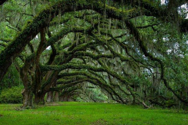 Arborii mirifici ai lumii, in noua poze uluitoare - Poza 8