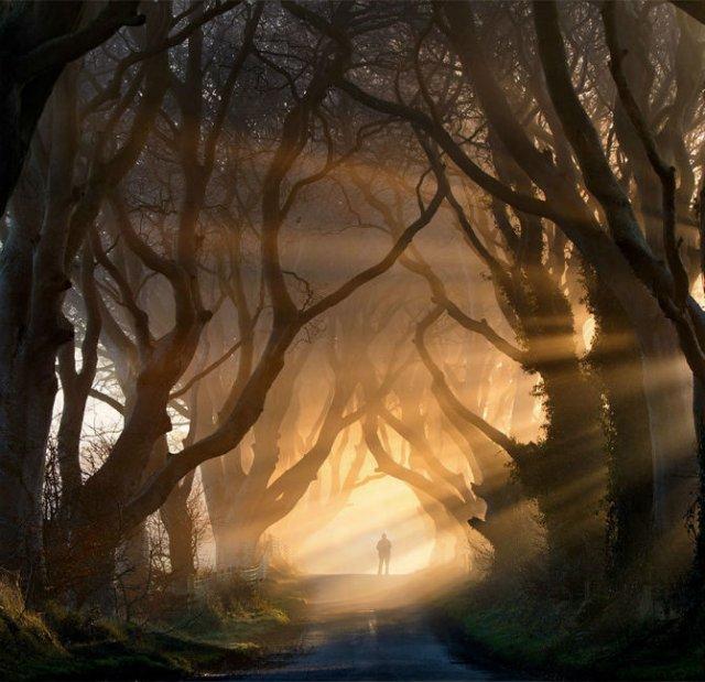 Arborii mirifici ai lumii, in noua poze uluitoare - Poza 9