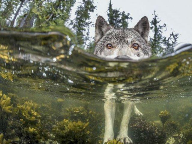 National Geographic: Cele mai bune fotografii din 2015 - Poza 12