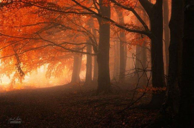 Un vis de toamna, printre copaci - Poza 12