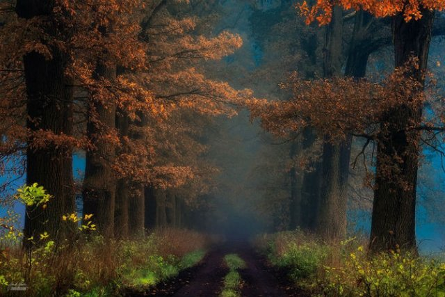Un vis de toamna, printre copaci - Poza 13