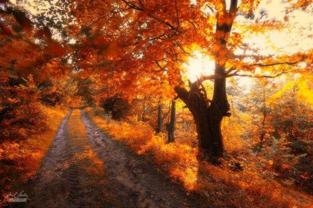 Un vis de toamna, printre copaci - Poza 14