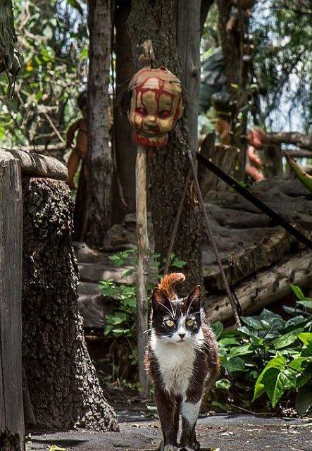 Insula Papusilor, in 11 fotografii care dau cosmaruri - Poza 5