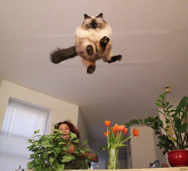 Altfel de poze cu pisici, in ipostaze haioase - Poza 9