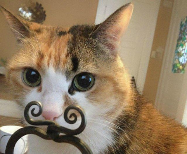 Altfel de poze cu pisici, in ipostaze haioase - Poza 10