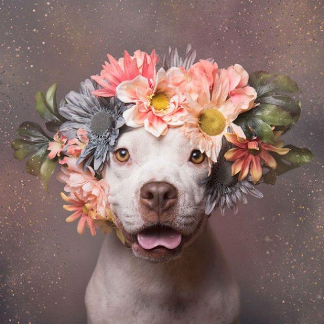 Pit Bull Flower Power: Ipostazele gingase ale cainilor de temut - Poza 17